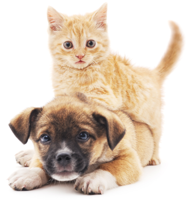 Image of happy kitten and puppy